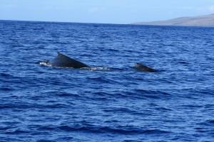 20090331_whale1
