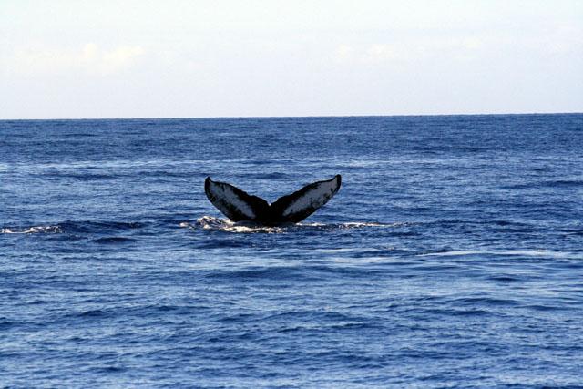 20090331_whale2